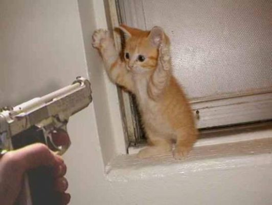 kitten-with-hands-up-gun-pointed-at.jpg
